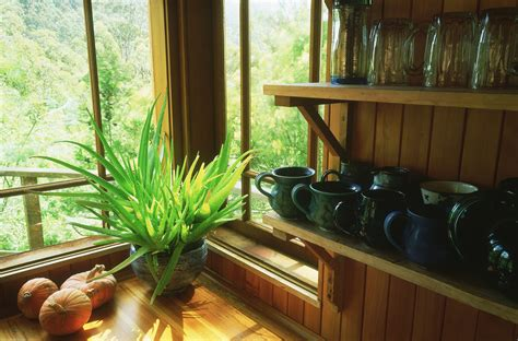 houseplants  sunny windows