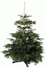 Tannenbaum Mit Ballen Kaufen by Tannenbaum Kaufen Der Zu Nat 252 Rlich Kaufe Ich