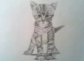 how to draw a realistic cat how to draw a realistic cat drawing a kitty cat