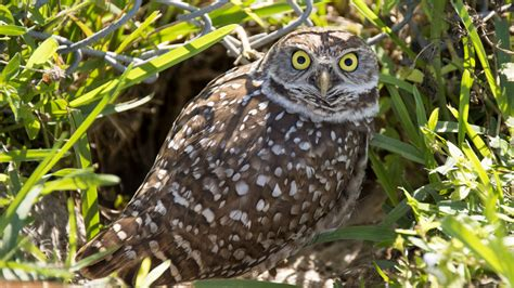 owl doesnt give hoot charter school tamarac talk
