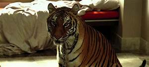 Ten deep 70314 top 10 movie cats 411mania for The hangover tiger in the bathroom