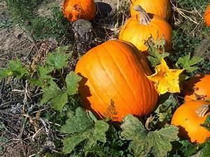 20 Amazing Health Benefits Of Pumpkin Juice  U0026 Pumpkin Seeds