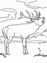 Elk Coloring Hunting Pages Sniper Antlers Rifle Drawing Its Colouring Rocky Mountain Getdrawings Guns Popular sketch template