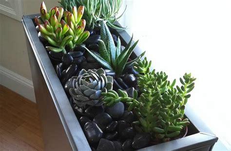 mini plante grasse un mini jardin d int 233 rieur tutos et conseils