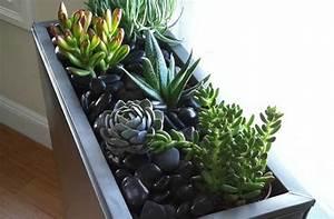 Jardin D Interieur : un mini jardin d 39 int rieur tutos et conseils ~ Dode.kayakingforconservation.com Idées de Décoration