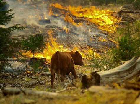 wild animals    wildfire