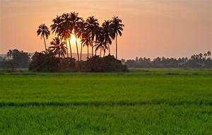 Siolim: A Village Inked by Nature's Innocent Beauty ...