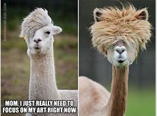 Llamas and Alpacas That Will Make Your Day