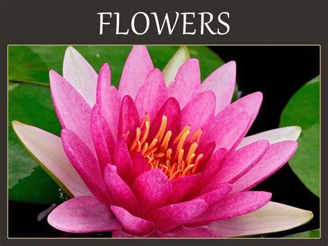 flower meanings birth flowers  language  flowers