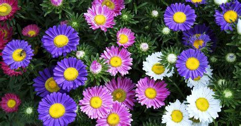 toko bunga toko bunga bekasi jual bunga ucapan hub