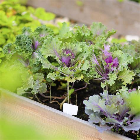 coltivare in casa coltivare le piante aromatiche sul balcone green mag