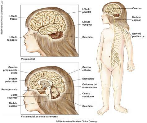 tumores pediatricos del sistema nervioso central ilustraciones medicas cancernet