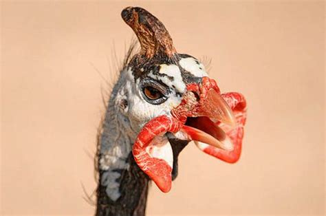 Flat Out Ugly and Disturbing Animals Barnorama