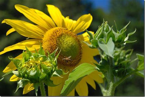 are bees color blind designing a landscape for color blind coast