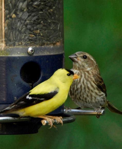 best 28 mn bird identification birding in minnesota a