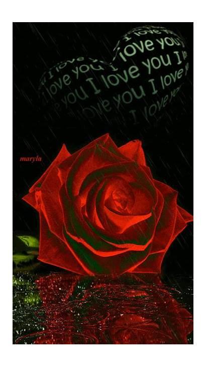 Rose Heart Gifs Raining Colorful Lluvia Imagenes