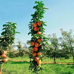 Apfelbaum Für Balkon : s ulen apfel sonate von g rtner p tschke ~ Michelbontemps.com Haus und Dekorationen