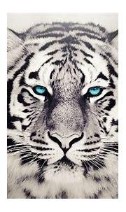 Dangerous Animals Wallpapers - Top Free Dangerous Animals ...