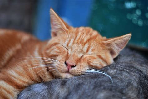15 Clever Names For Your Ginger Cat