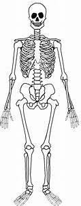 Skeletal System Blank   New Calendar Template Site