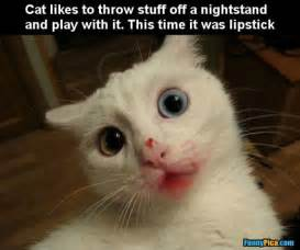 silly cat cats 1 funnypica