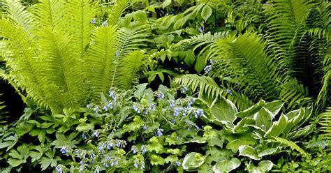 Rankende Pflanzen Garten Schatten by Garten Schatten Pflanzen Garten Mit Schatten Pflanzen