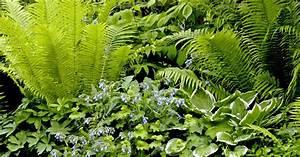 Schattenpflanzen Mit Blten Und Blattschmuck Mein