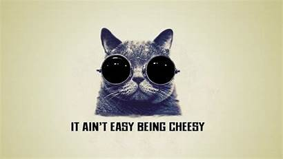 Cat Cool Cheesy Being Easy Ain Wallpapers