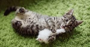 Jouets Pour Chats D Appartement : arbre chat pour des chats d appartements heureux le ~ Melissatoandfro.com Idées de Décoration