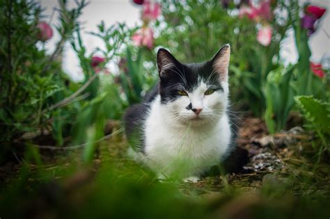 how to keep cats out of yard 10 ways to keep cats out of your yard