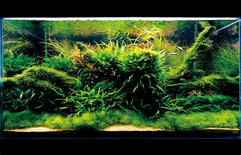 Aquascape Ada - seahorse aquariums now suppling ada in ireland