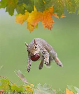 Totally, Nuts, Amazing, Squirrel, Acrobatics, Show, There, Is, More, Than, One, Way, To, Crack, A, Nut