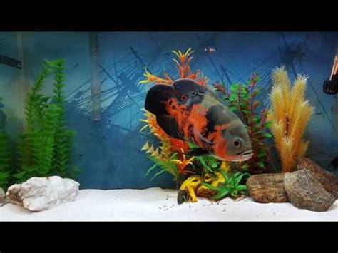oscar fish wholesaler wholesale dealers  india