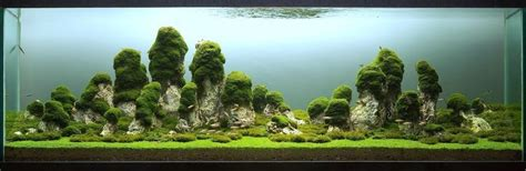 Mountain Aquascape by Mountain Iwagumi Misc World And Aquascaping