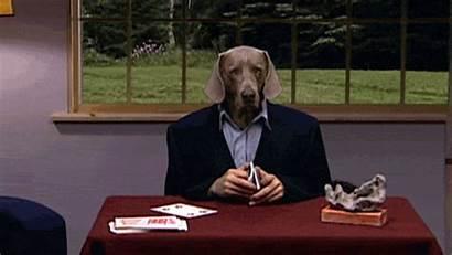 Weimaraner Poker Weimar Dog Avere Gifs Non
