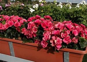 ideale blumenkasten balkonkasten selber bauen With französischer balkon mit garten begonien