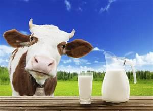 Animal Milk Issues