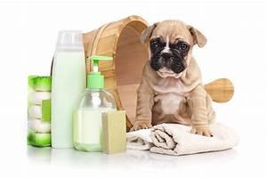 Puce De Chien : 7 astuces pour faire partir les puces de chien grands ~ Melissatoandfro.com Idées de Décoration