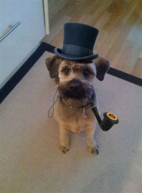dog sherlock 1funny sir schnoodle steampunk chap