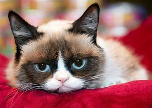 1000+ images about GRUMPY CAT on Pinterest | Grumpy Cat ...