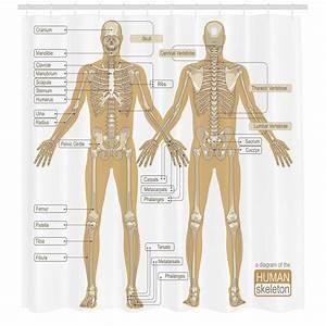 Ambesonne Human Anatomy Diagram Of Human Skeleton System