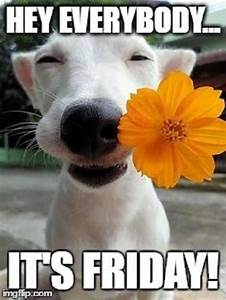 Hey Everybody...Its Friday Pictures, Photos, and Images ...