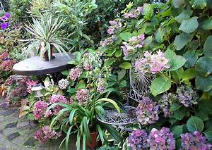 Wann Hortensien Pflanzen : hortensien pflanzen hortensien pflanzen infos ~ Lizthompson.info Haus und Dekorationen