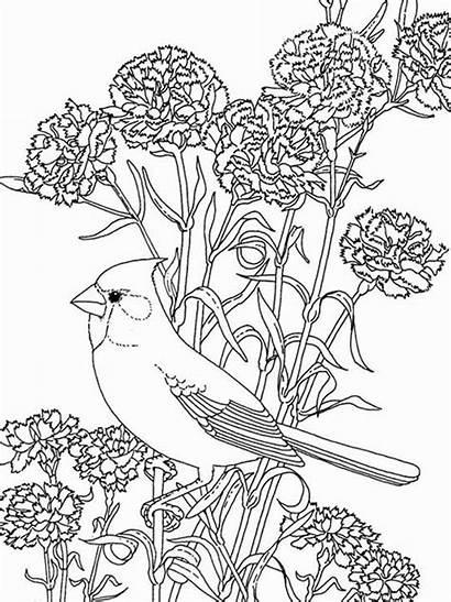 Coloring Pages Flowers Bird Birds Among Cardinal