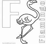 Coloring Flamingo Gopher Goldy Drawing Line Printable Template Clipartmag sketch template