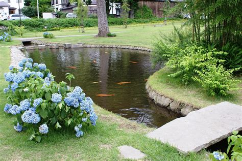 fish pond  garden backyard design ideas