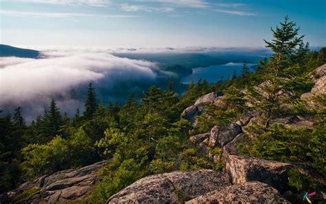 Wildlife Mountain Natures Walldevil