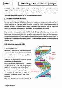 Adn - Support De L U0026 39 Information G U00e9n U00e9tique - Seconde