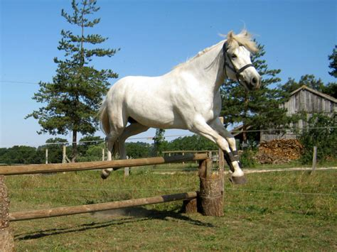 chambre d hotes design paardrijden