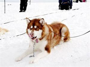 14 best images about Eight Below on Pinterest | Paul ...